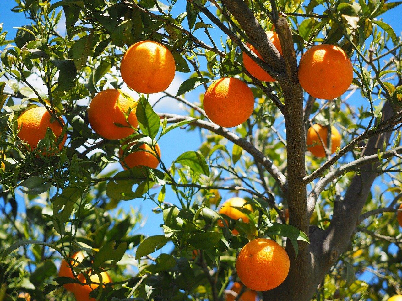 cueillir fruits voisin jardin mitoyen